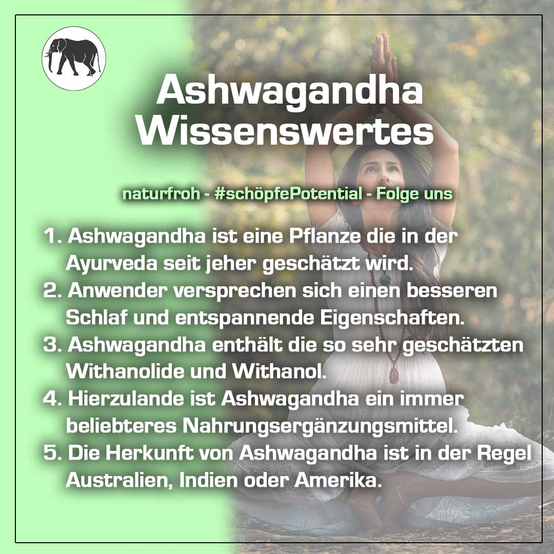 Ashwagandha Pulver