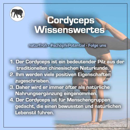 Cordyceps Kapseln