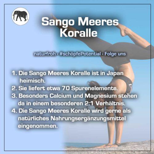 Sango Meeres Koralle