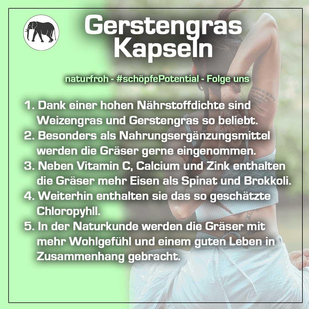 Gerstengras Kapseln